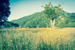 New Zealand Landscape Royalty Free Stock Photo