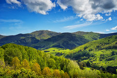 New Zealand Landscape. New Zealand, Landscape of the road to Akaroa, the south island Stock Images