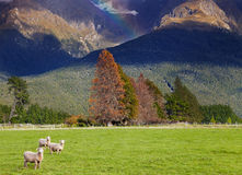 New Zealand landscape, South Island Royalty Free Stock Images