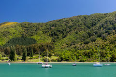 New zealand landscape. On sunny day Stock Images