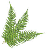 New zealand leaf Stock Photo