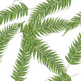 New zealand leaf. Fern leaves Royalty Free Stock Images