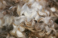 New Zealand merino wool background. Pile of New Zealand merino wool Royalty Free Stock Image