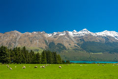 New Zealand mountains Royalty Free Stock Image