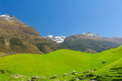New Zealand mountains. Beautiful landscape of the New Zealand - hills covered by green grass with herds of sheep with mighty mountains covered by snow behind stock photo