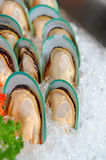 New Zealand Mussels Stock Image