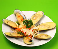 New Zealand mussels Royalty Free Stock Photo