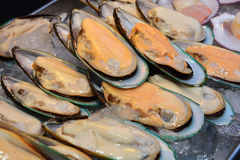 A New Zealand mussels. And ice close up Royalty Free Stock Image