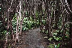 New Zealand native bush. Rata forest at Bluff Royalty Free Stock Image