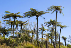 New Zealand Native bush Royalty Free Stock Images