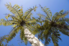 New Zealand Native bush Stock Photography