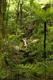 New Zealand Native Bush royalty free stock photos