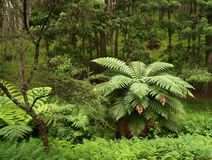 New Zealand native forest Royalty Free Stock Photo