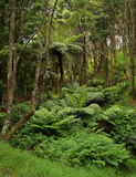 New Zealand native forest Royalty Free Stock Images
