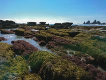 New Zealand natural beach in southern island. Natural landscape background royalty free stock photo