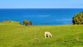 New Zealand nature Royalty Free Stock Photo
