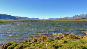 New Zealand nature Royalty Free Stock Image