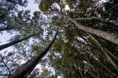 New Zealand, Okarito forest Royalty Free Stock Image