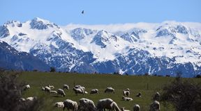 New Zealand Old West Road Royalty Free Stock Photo
