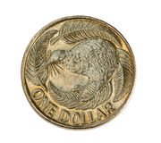 New Zealand One Dollar Coin Stock Photography