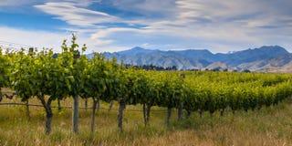 new zealand organic vineyard Marlborough area