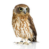 New Zealand owl Stock Photos