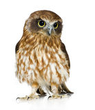 New Zealand owl Stock Photo