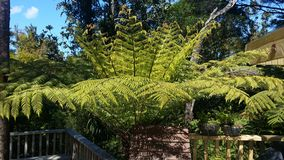 New Zealand Punga Tree Stock Photos