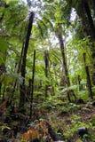 New Zealand, rain forest Franz Josef glacier view road Stock Photography
