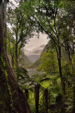 New Zealand, rain forest Franz Josef glacier view road Stock Images