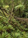 New Zealand rainforest Stock Photos