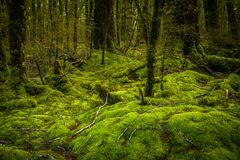 New Zealand rainforest Stock Images