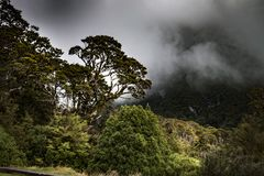 New Zealand rainforest of New Zealand d.y. New Zealand rainforest and plants of New Zealand, View rainforest in Southern New Zealand d.y Royalty Free Stock Photography