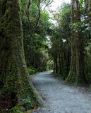 New Zealand rainforest landscape. New Zealand rainforest with a foot path Royalty Free Stock Photography