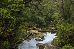 New Zealand royalty free stock photography