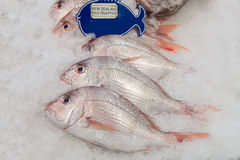 New Zealand red snapper fish on ice. In the market Stock Photography
