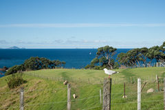 New zealand rural and coastal scene. Royalty Free Stock Photo