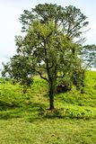 New Zealand rural trees. In the countryside Stock Photos