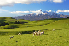 New Zealand Scenery royalty free stock photography