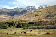 New Zealand scenery Royalty Free Stock Photo