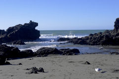 New Zealand seashore. The picture with the seagull below is taken in a sunny day, this is a beach that local New Zealand families would spend their time there Stock Photo