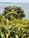 New Zealand: seaside garden native plants Stock Image
