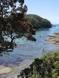 New Zealand summer: marine reserve royalty free stock photo