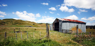 New Zealand. Taken on the North Island of New Zealand, fields of sheep are a common feature Royalty Free Stock Photography