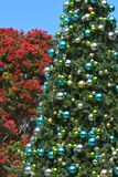 New Zealand traditional and native Christmas trees royalty free stock photo