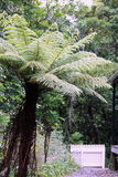 New Zealand Tree Fern Royalty Free Stock Photos