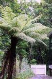 New Zealand Tree Fern Royalty Free Stock Photos