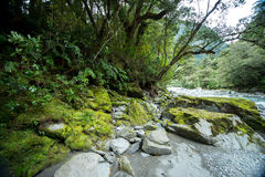 New Zealand view. Royalty Free Stock Photo