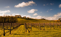 New Zealand Vineyard Royalty Free Stock Photos