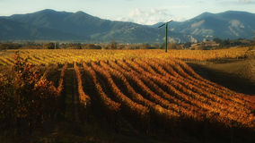 New zealand vineyard Stock Photography